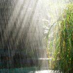گزارش کامل اداره هواشناسی از وضعیت بارندگی های نیشابور ; آغاز بارانیِ بهار، سال نکوی نیشابور را نوید داد