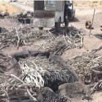 تاراج بی رحمانه طبیعت به دست زغال فروشان