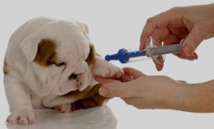 rabies-vaccine