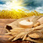 نیشابور قطب تولید غذای استان