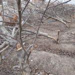 جنایت علیه طبیعت ; قتل شبانه و عجیب درختان در یکی از روستاهای نیشابور